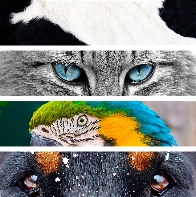 animals-1320240_640